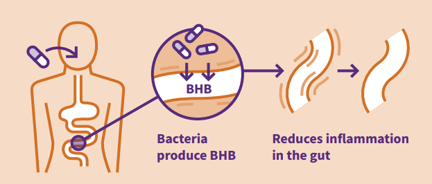 3HB drug delivery to gut halts inflammation
